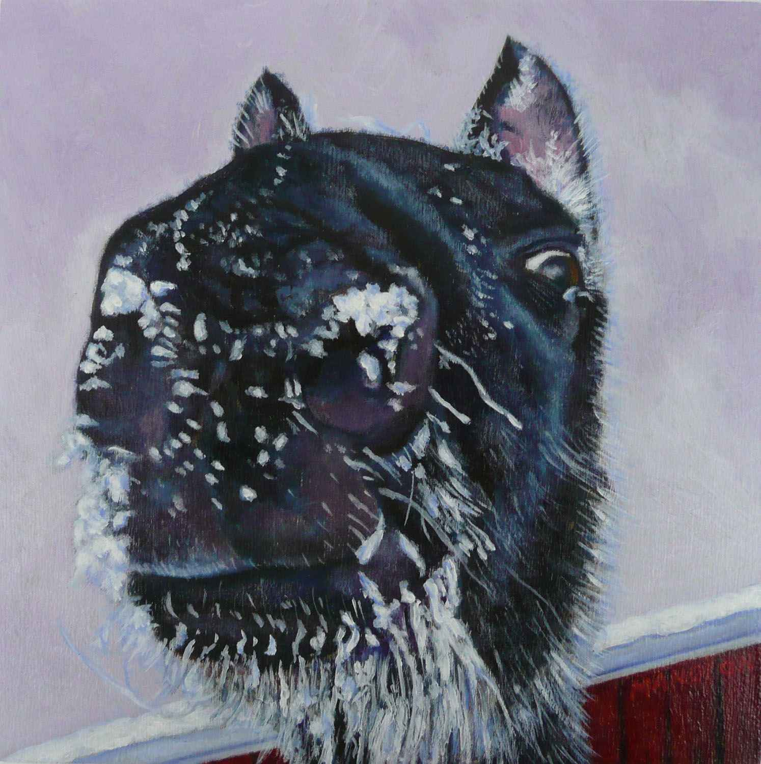 Rocky's Ice Whiskers by  Valerie Mangion - Masterpiece Online