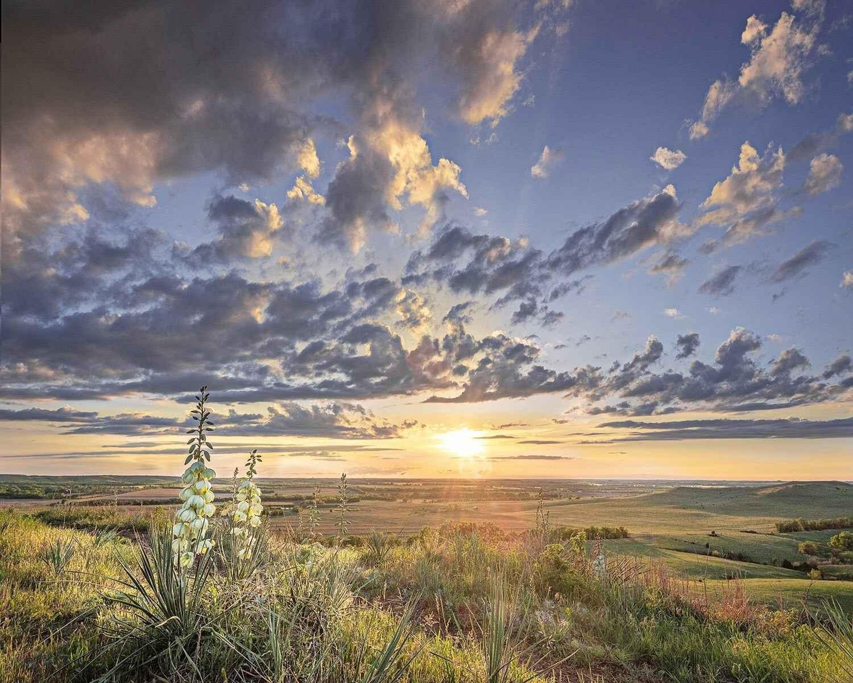 Yucca, Sun, Coronado ... by  George Jerkovich - Masterpiece Online