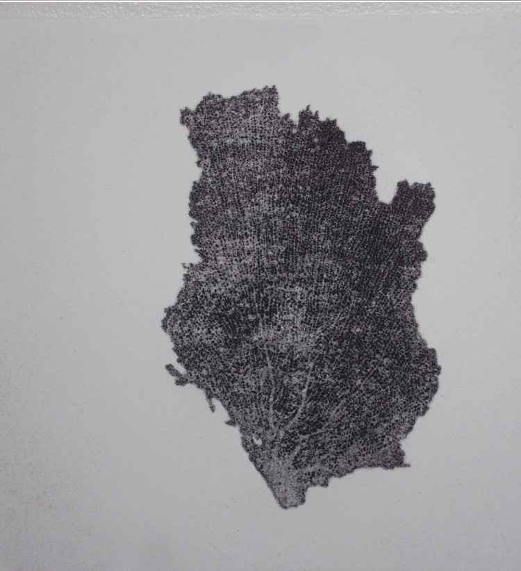 Black Coral Ghost p... by  Abigail Romanchak - Masterpiece Online