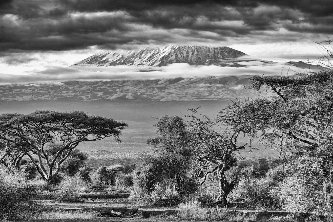 Dream of Kilimanjaro by  Xtina Parks - Masterpiece Online
