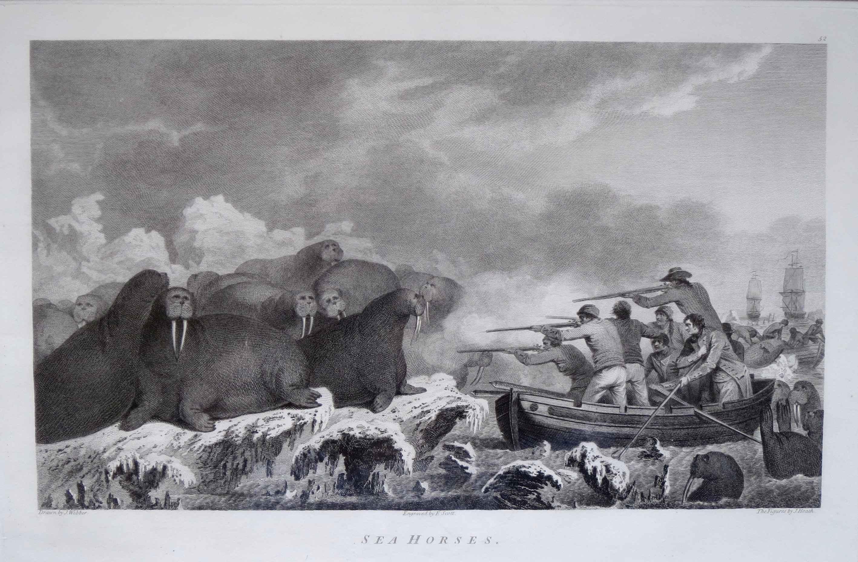 Sea Horses by  John Webber (1752-1793) - Masterpiece Online