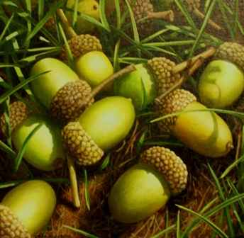 Acorns and Grass by  Loren DiBenedetto - Masterpiece Online