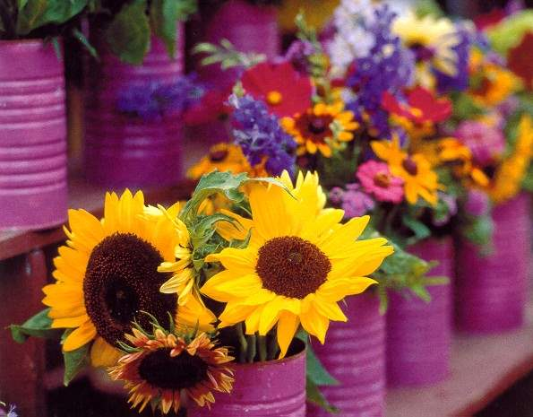 Sunflowers, Farmers' ... by  Alison Shaw - Masterpiece Online