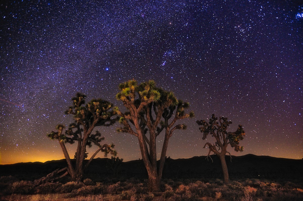 Joshua Tree Starlight by  Shane McDermott - Masterpiece Online
