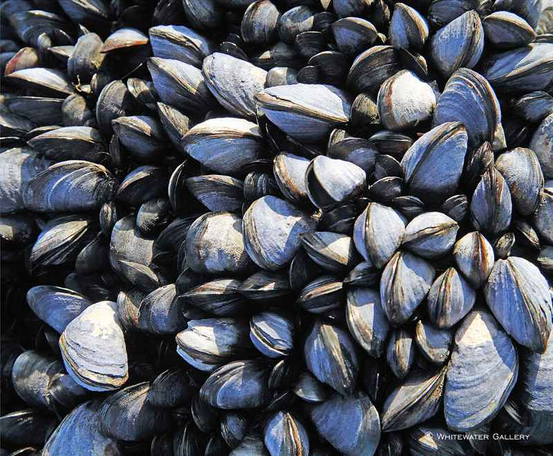 Mussels Placemat by   Placemats & Coasters - Masterpiece Online