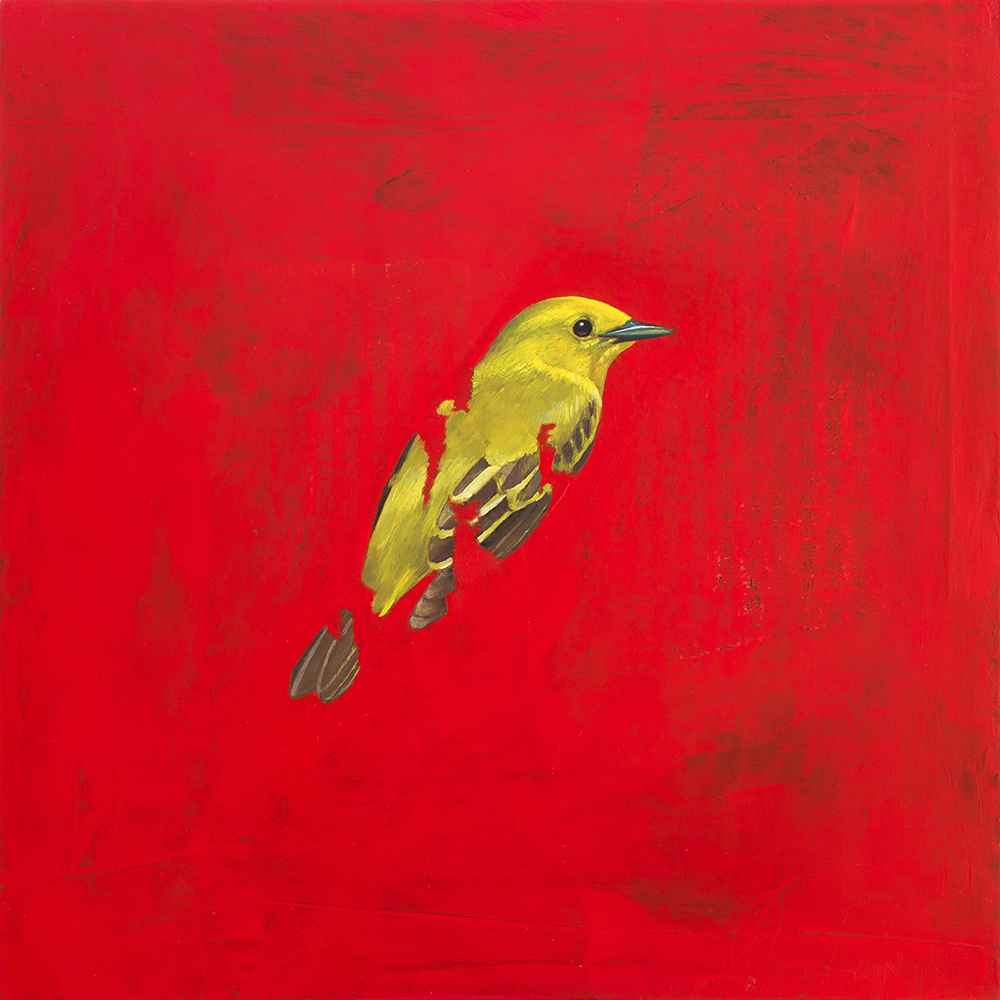Yellow Warbler by  Byron Gin - Masterpiece Online