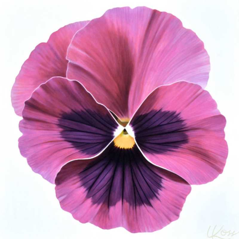 Pansy 4 by  Laurie Koss - Masterpiece Online