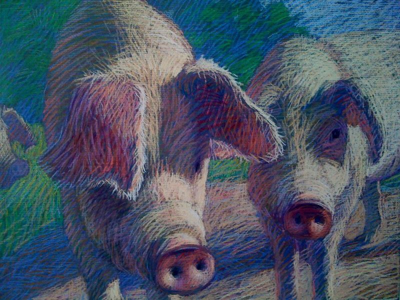 Porcine Morning by  Melissa Hefferlin - Masterpiece Online