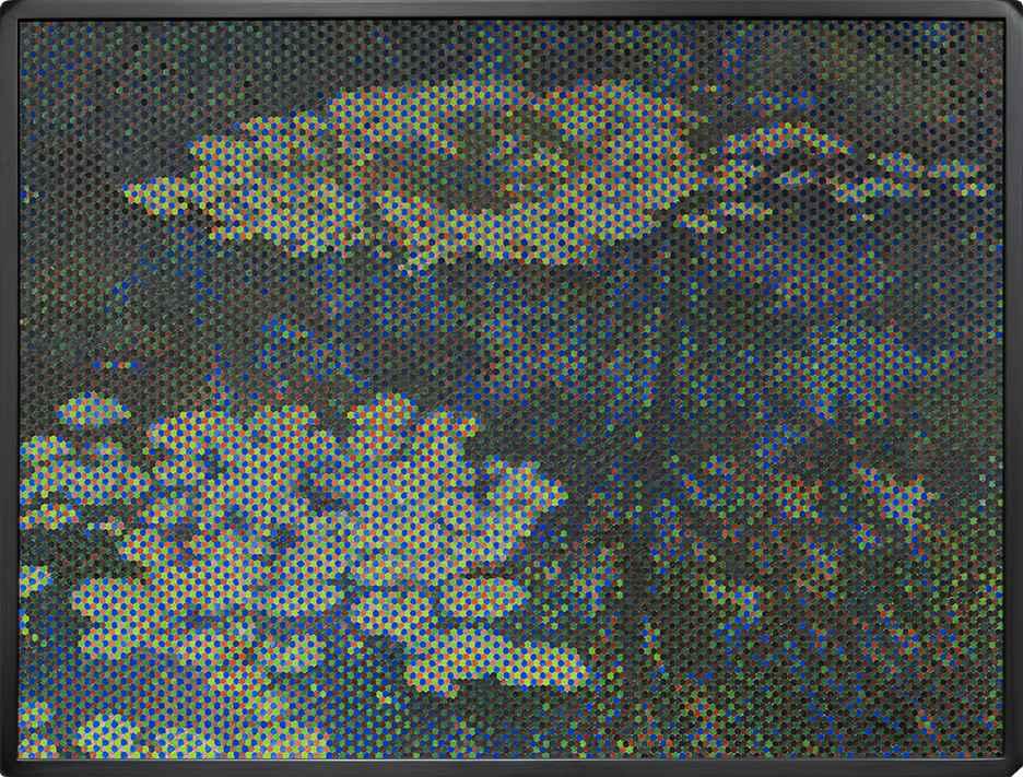 Waterlilies by John Roy