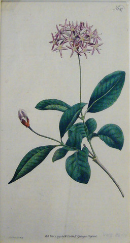 OKL - Antique Flower ... by   Unknown - Masterpiece Online