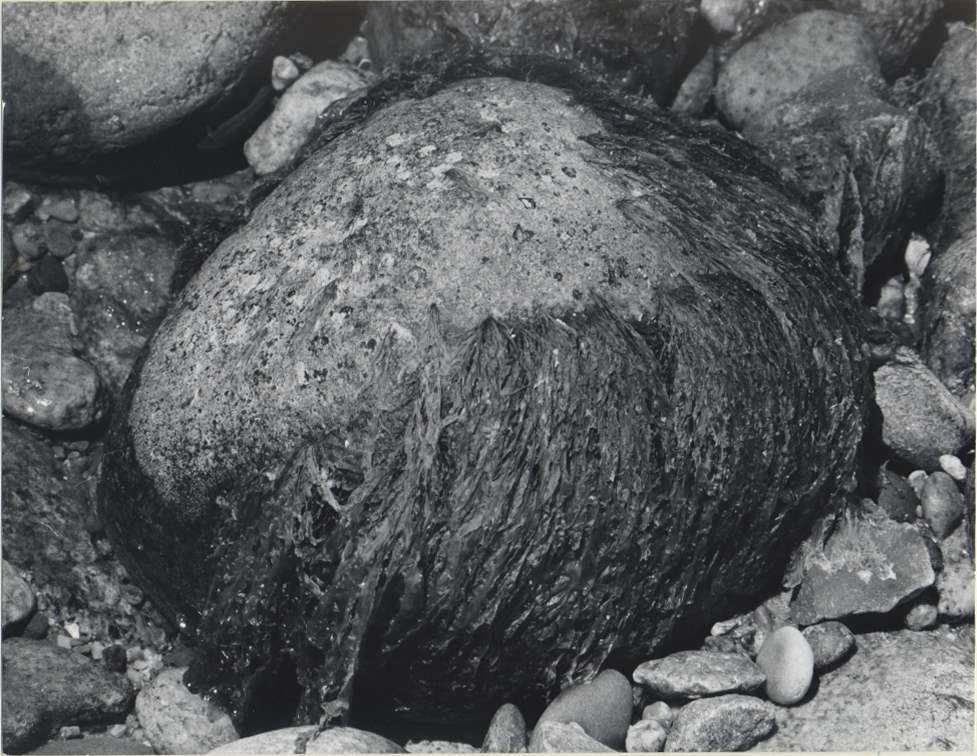 Algea-covered Stone by  Alfred Eisenstaedt - Masterpiece Online