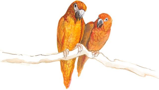 DP-PRETTY BIRDS by  P. Buckley Moss  - Masterpiece Online