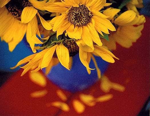 Sunflowers, Farm Pond... by  Alison Shaw - Masterpiece Online