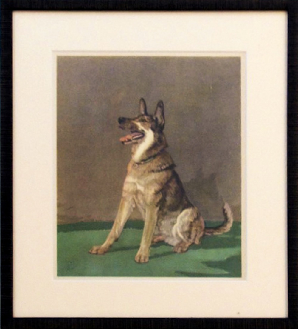 OKL - Framed dog prin... by  Diana Thorne - Masterpiece Online