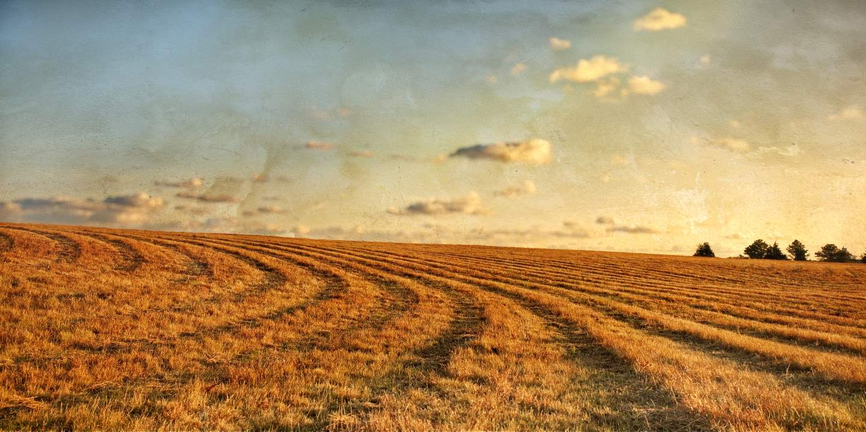 Autumn Light 5, Nat's... by  Michael Stimola - Masterpiece Online