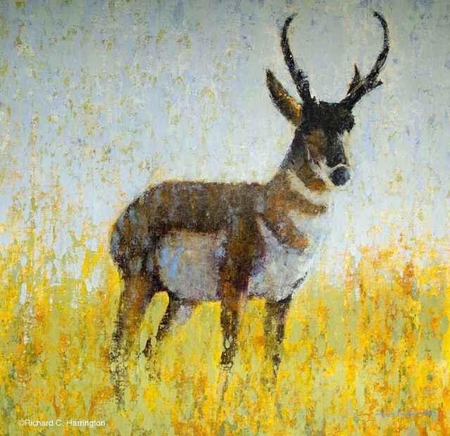 Pronghorn  by  Richard Harrington