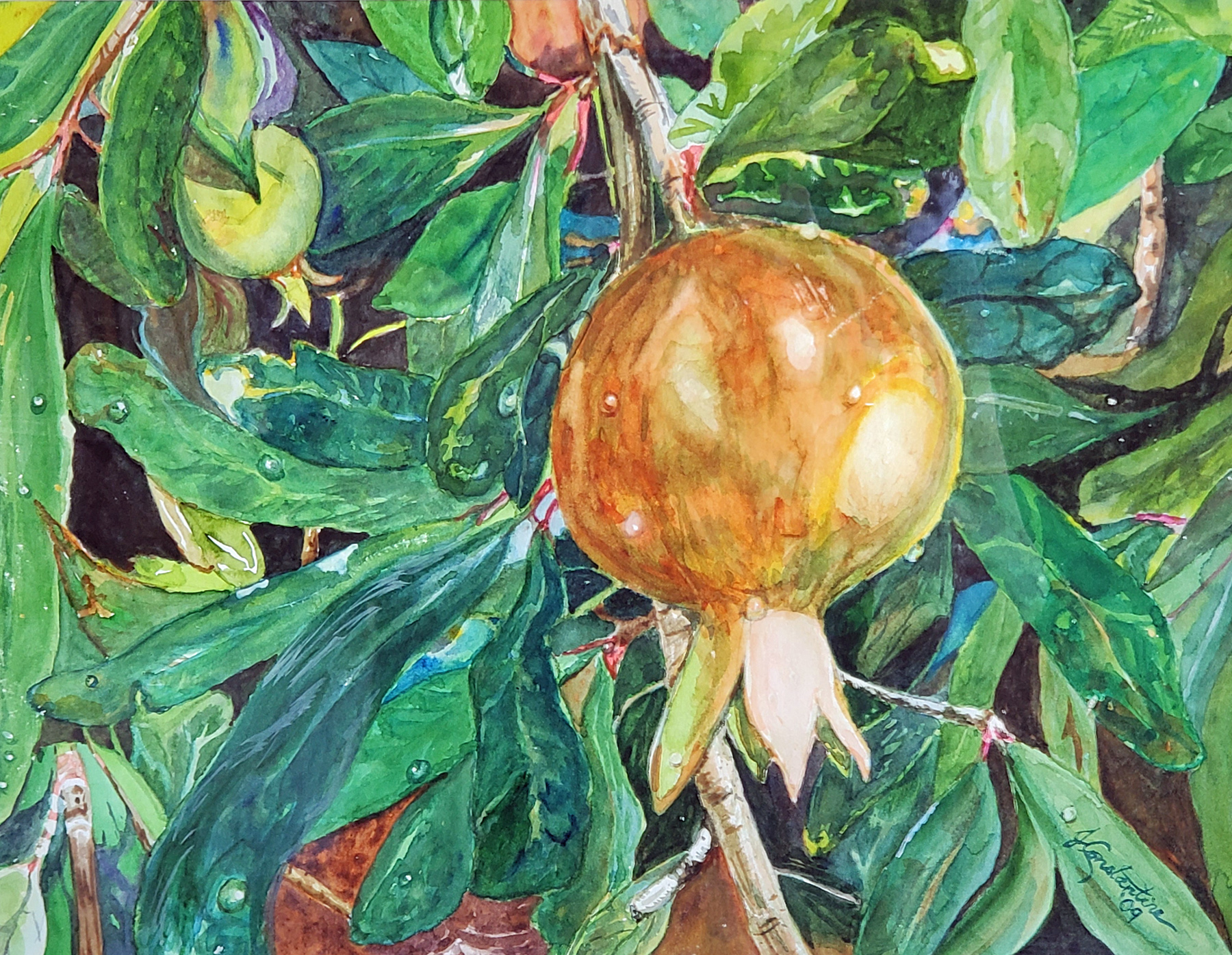 Oh My Pomegranate! by  Judy Constantine - Masterpiece Online