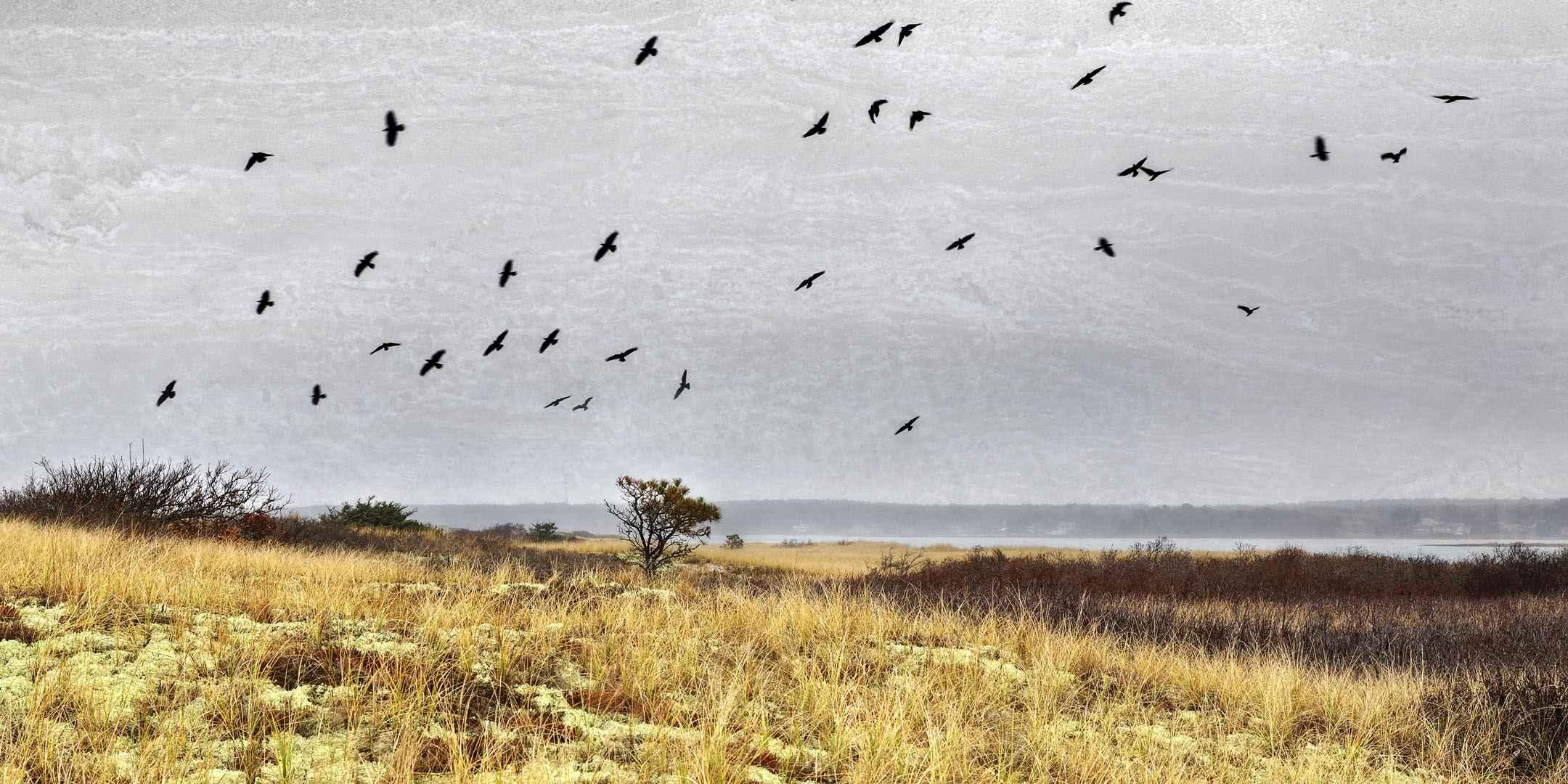 Winter Crows by  Michael Stimola - Masterpiece Online