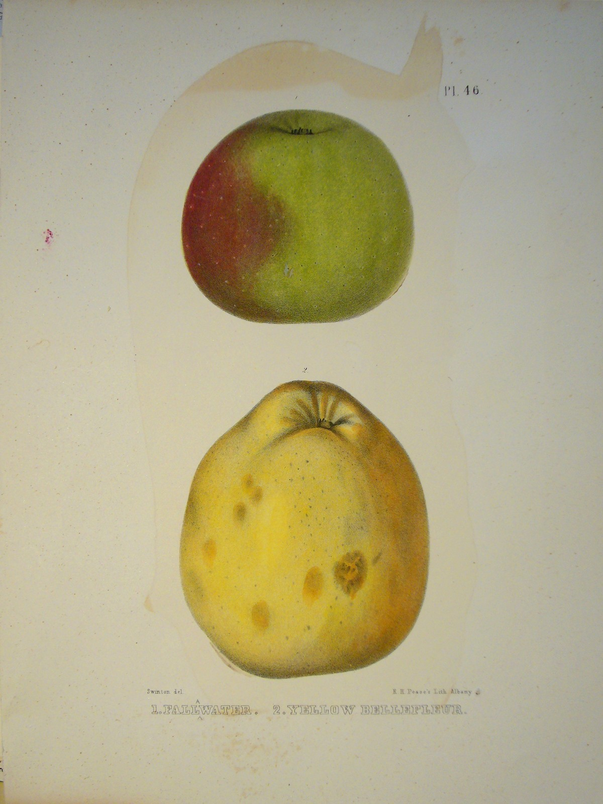 Fruits - fallwater, y... by   Anonymous - Masterpiece Online
