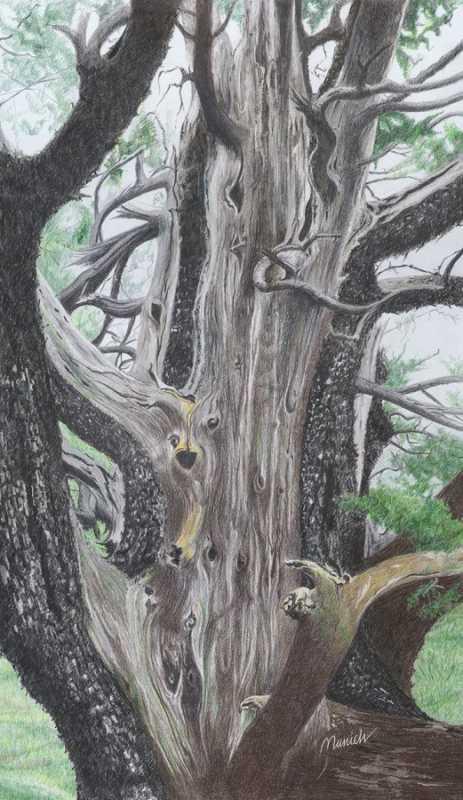 Wilson Mountain Wisdom by  Susan Henkels - Masterpiece Online