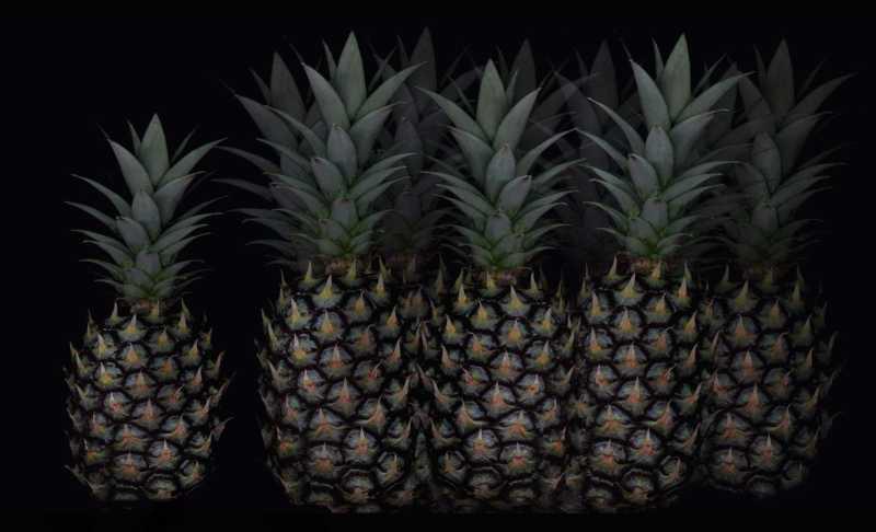 Pineapple by  Karen Daspit - Masterpiece Online