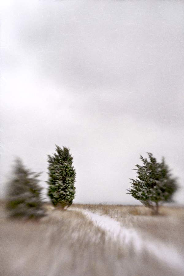 Winter Trails II, 2011 by  Michael Stimola - Masterpiece Online