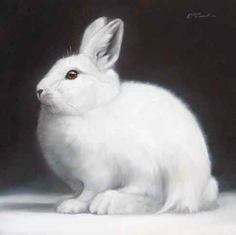 SNOWBALL by  Jennifer O'Cualain - Masterpiece Online