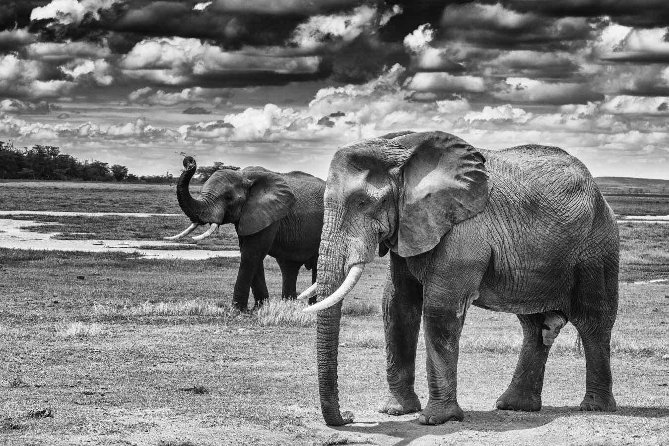 Amboseli Boy Time by  Xtina Parks - Masterpiece Online