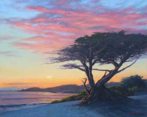 Red Sunset Cypress