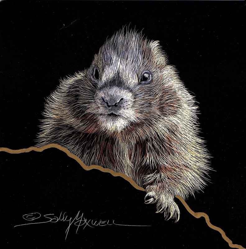 Ground Hog Straight On represented by  by  Sally Maxwell