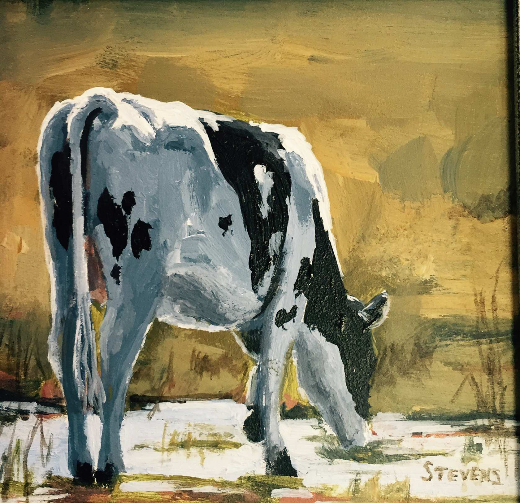 Holstein Drinking by Ms Sandra Stevens - Masterpiece Online