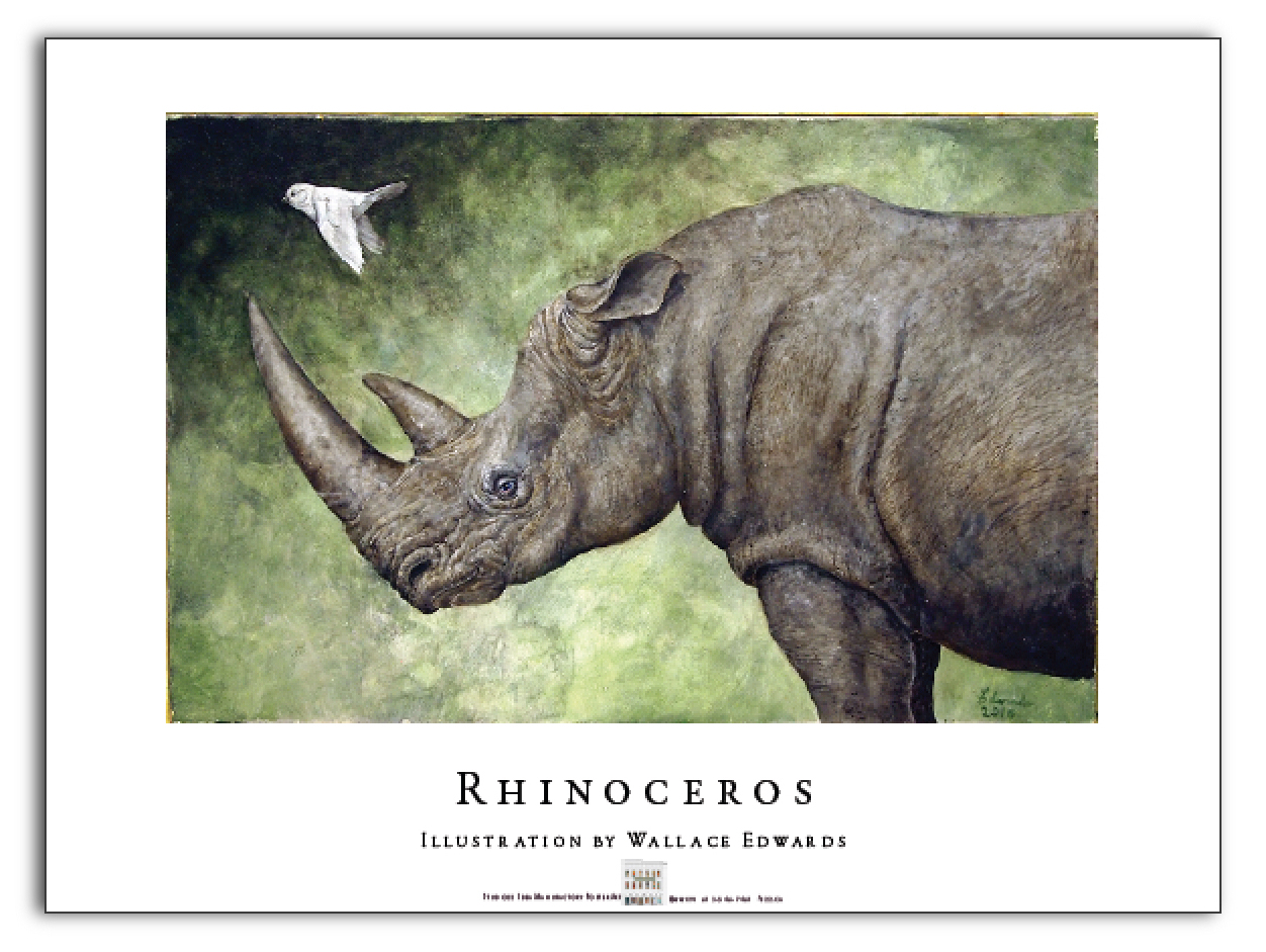 Rhino Poster  by  Wallace Edwards