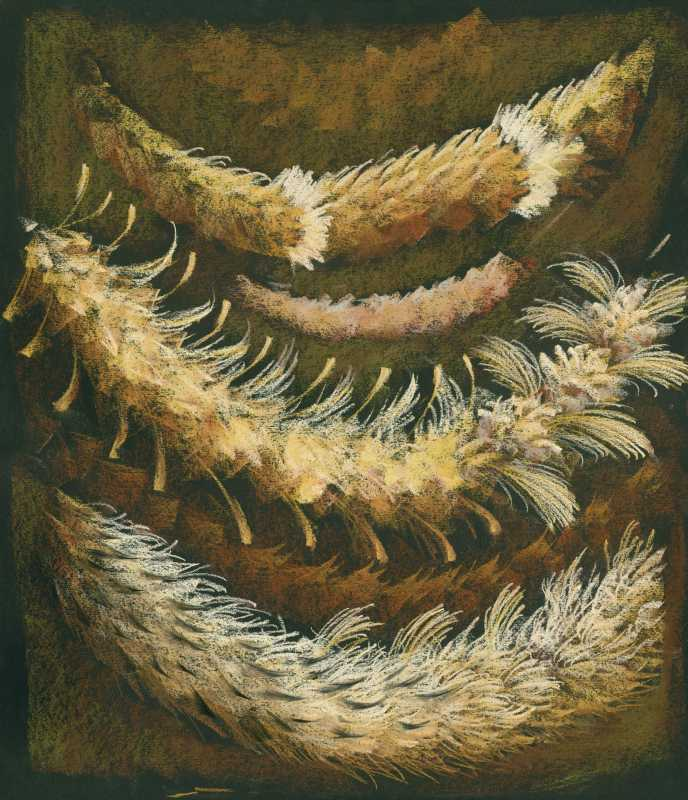 Feather Sketch 3 by  Shelley S. M. Miller - Masterpiece Online