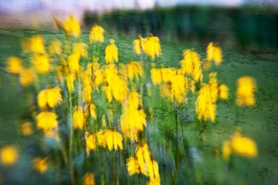 Yellow Dancers, 2009 by  Michael Stimola - Masterpiece Online