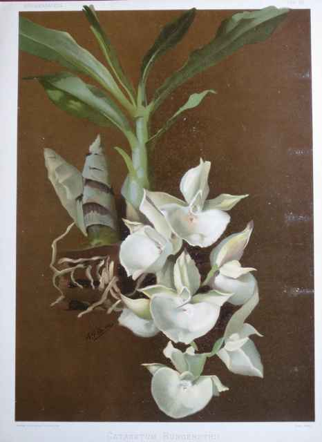 Reichenbachia: Cattle... by  H.G. Moon (1857-1905) - Masterpiece Online