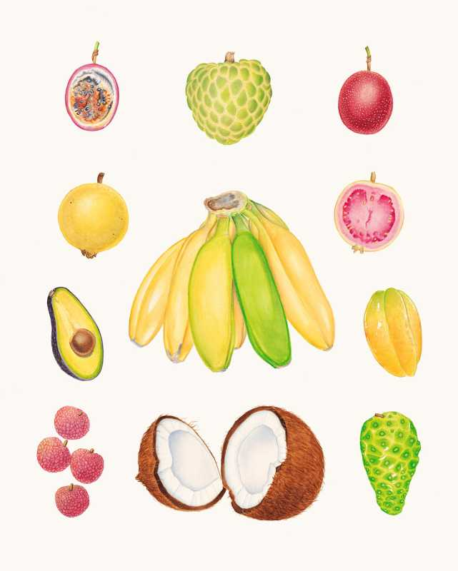 Tropical Fruit with B... by  Joel Carlson - Masterpiece Online