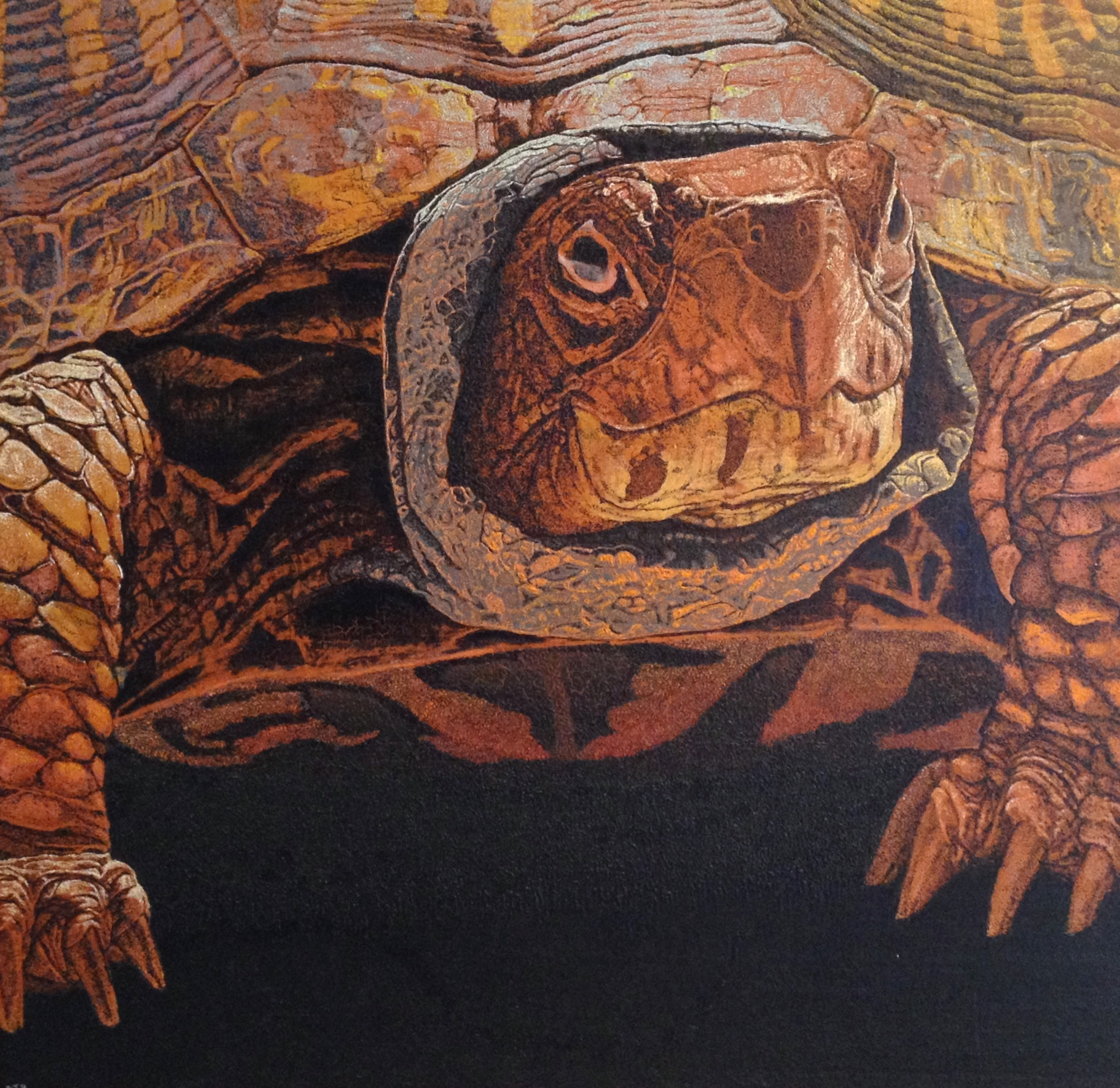 Tortoise by  DJ Hershman - Masterpiece Online