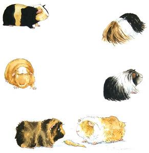 I Love Guinea Pigs (E...  by  Anita Jeram