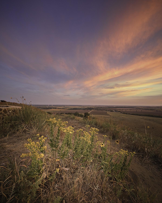 Sunflowers Coronado H... by  George Jerkovich - Masterpiece Online