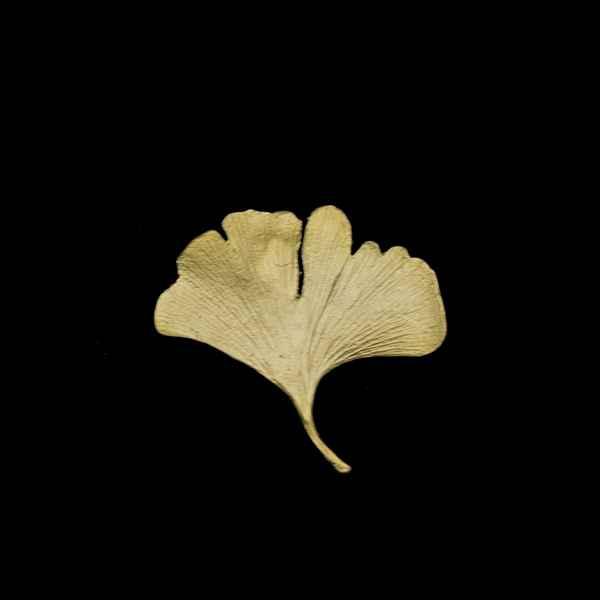 Ginkgo Tack Pin - Bronze