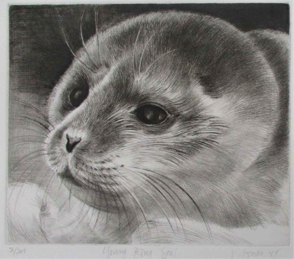 Young Ring Seal by  Liza Jones - Masterpiece Online