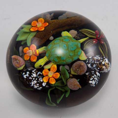 Lg Turtle