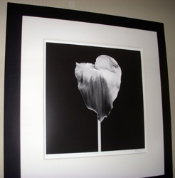 Calla Lily and Shadow by  Robert Mapplethorpe - Masterpiece Online