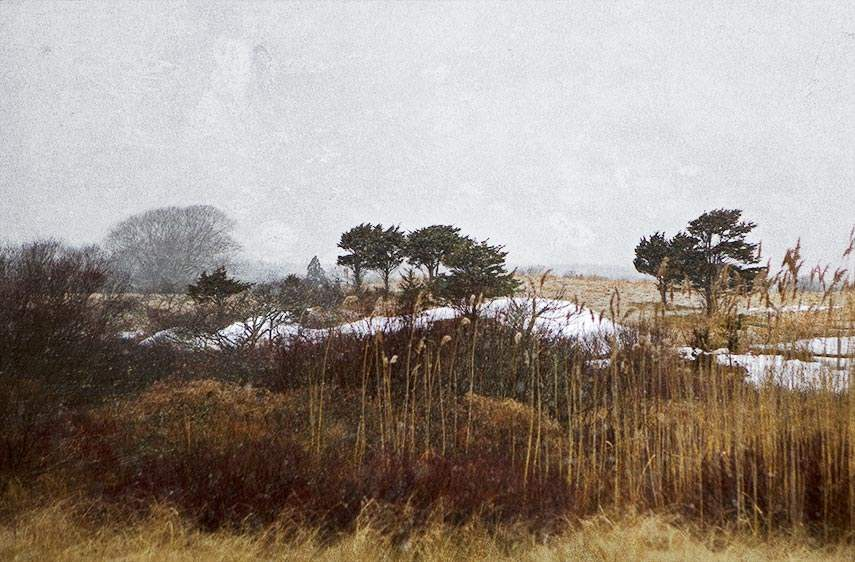 Winter Day, 2009 by  Michael Stimola - Masterpiece Online