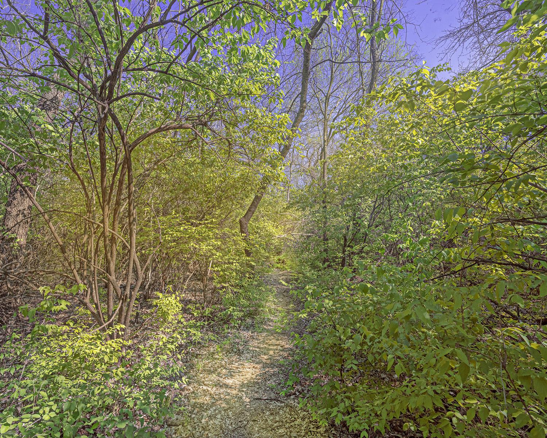 Forest Floor 4 by  George Jerkovich - Masterpiece Online