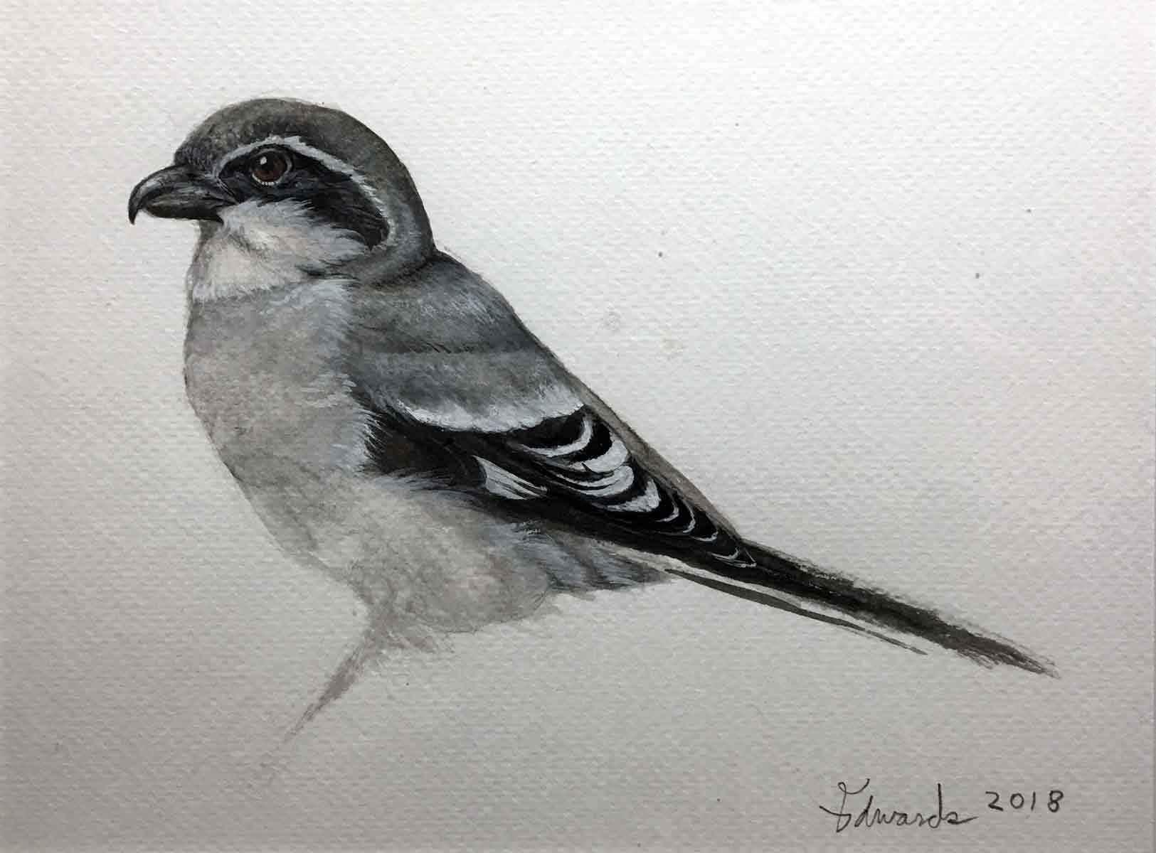 Shrike  by  Wallace Edwards