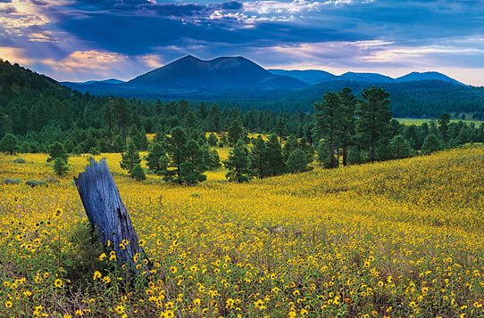 Wildflowers East of S... by  Shane McDermott - Masterpiece Online