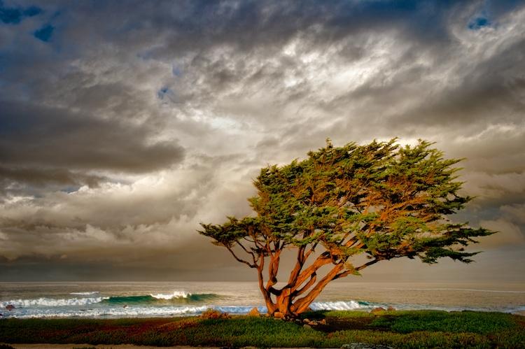 The Wind Catcher by  Shane McDermott - Masterpiece Online