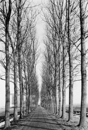 Tree Lined Road by  Alfred Eisenstaedt - Masterpiece Online