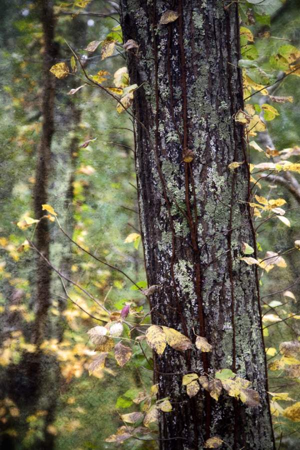 Autumn in Brightwoods... by  Michael Stimola - Masterpiece Online